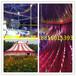 南京市有没有马戏团表演马戏团报价