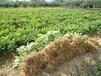 赣南优质纽荷尔脐橙苗,油桃苗,红肉脐橙苗等各种果树苗!