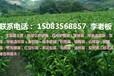 宁都苗圃供应优质纽贺尔脐橙苗、芽孢、大小积壳苗、温柑苗等各种果树苗
