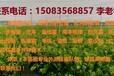 赣州优质纽荷尔脐橙苗,芽孢苗,早熟温柑苗等各种果树苗!