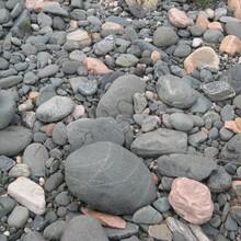 河北邢台鹅卵石厂家,邢台鹅卵石批发,邢台鹅卵石价格