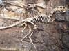 河南惊现复齿河南龙化石出土,比恐龙早5000万年蛋化石