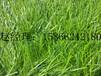 山东青岛铺设幼儿园人造草坪的厂家