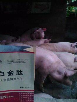 育肥猪专用3