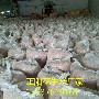 正阳新花生米价格图片