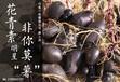 一级原种繁育黑金刚土豆种薯