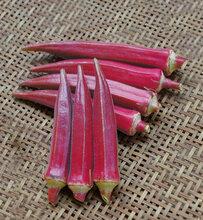 紅袖紅秋葵種子圖片