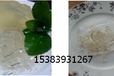皮胶原蛋白食品夏季生产技术