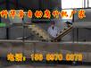 贺州小型腐竹机厂家、腐竹油皮生产线、腐竹机多少钱一台