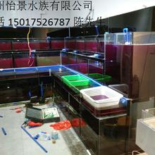 萝岗区定做玻璃海鲜鱼缸,萝岗区广州公司定做普通玻璃海鲜池鱼缸图片