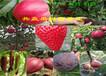 湖南懷化果樹哪里有、果樹苗多少錢賣