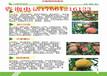 云南怒江哪里有3年梨树苗成苗_3年梨树苗哪里卖的好