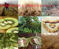 四川广安卖核桃树苗哪里有核桃树苗价格受欢迎