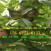 宁夏固原卖的桃树多少钱、蟠桃树苗批发价格图片