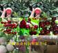 江苏徐州嫁接核桃树多少钱卖、嫁接核桃树要卖多少钱一棵