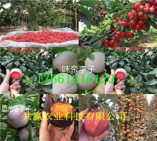 河南晚熟桃树苗多少钱卖、晚熟桃树苗要卖多少钱一棵