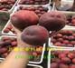 宁夏银川1-21蟠桃树苗新品种价格、桃树苗批发