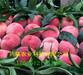 油蟠桃树苗种植介绍、油蟠桃树苗多少钱卖一棵
