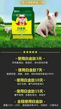 养猪日长4斤添加剂猪催肥最简单方法养猪方法喂什么长得快图片