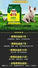 猪吃什么长得快日长三斤猪不吃食怎么办图片