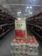 蛋鸡增蛋药蛋红168蛋鸡怎样养下蛋多?图片