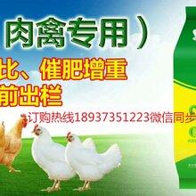 肉鸭催肥饲料添加剂肉禽专用白金肽价格图片