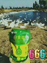 肉鸭解决过料用什么肉鸭催肥药提高饲料的消化利用率图片