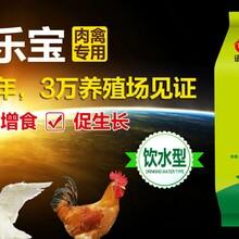 肉鸡后期催肥药肉鸡吃什么饲料长得快肉禽催肥饲料添加剂图片