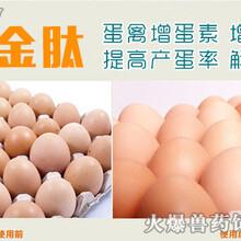 蛋鸭吃什么下蛋多蛋禽增蛋中药蛋禽吃什么下蛋多图片