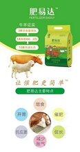 牛羊肥易达多少钱一包肥易达催肥效果怎么样