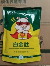 养猪日长四斤添加剂配方怎么喂猪一天长三斤图片