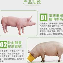 育肥猪催肥的饲养方法猪催肥药价格生猪催肥图片