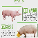 猪吃什么长的快