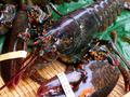 供应:波士顿龙虾加拿大龙虾波龙进口海鲜批发图片