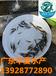 加州鱸魚苗今日報價時價廣東華夏水產供應2-5公分魚苗