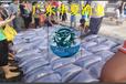四川绵阳银雪鱼苗批发/广东网箱养殖鸭嘴鱼苗/清远银鳕鱼苗