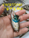 廣西丁魚/廣西貴港丁桂魚苗/廣西南寧銀鱈魚苗