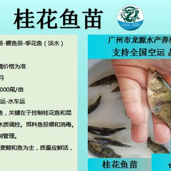 桂花鱼多少钱一斤湖南桂花鱼苗多少钱一尾