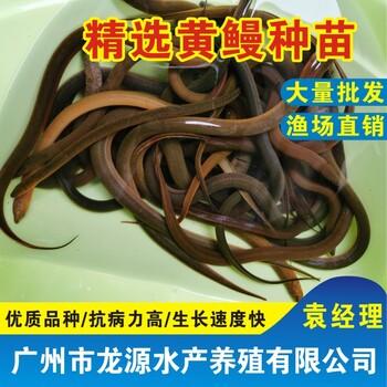 湖南永州黄鳝种苗供应永州丁桂鱼苗批发祁阳泥鳅养殖