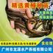 湖北荊州黃鱔苗荊州長期供應黃鱔苗批發鮮活水產黃鱔苗