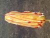 广州2016年学脆皮玉米技术培训,最好的脆皮玉米教学