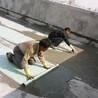 东莞漏水补漏,东莞做防水,东莞屋面防水工程