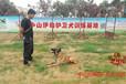 中山伊甸护卫犬训练基地:让您的爱宠更加聪明