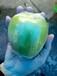 台湾新品种青枣果苗-新青枣果苗批发-青枣苗价格-新品种青枣果苗电话