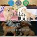广州市海珠区哪家犬舍口碑最好海珠区哪里有卖金毛犬