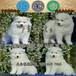 广州市哪里有卖宠物狗的地方天河区哪里有萨摩耶犬买