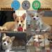 广州南沙区有没有卖狗的狗场南沙区哪里有柯基犬买
