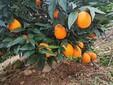 遵義果園果樹價值評估貴陽拆遷征收補償評估圖片
