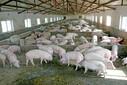 廣西武鳴養雞場資產評估養豬場評估養殖場經營收益評估圖片