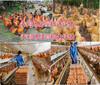 畢節養雞場資產評估養豬場評估養殖場經營收益評估圖片